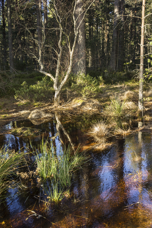 garten: Forest Nature at Abernethy in the Cairngorms National Park of Scotland.