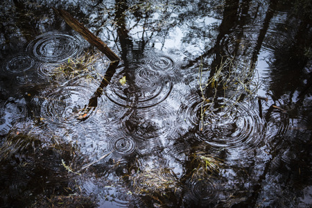 Raindrops in forest pool at Loch Garten in the Cairngorms National Park of Scotland.