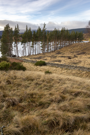 Stone wall and trees at Loch Pityoulish in the Cairngorms National Park of Scotland.