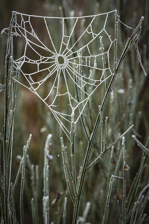 Frosted web in Abernethy Caledonian forest in the Cairngorms National Park of Scotland.