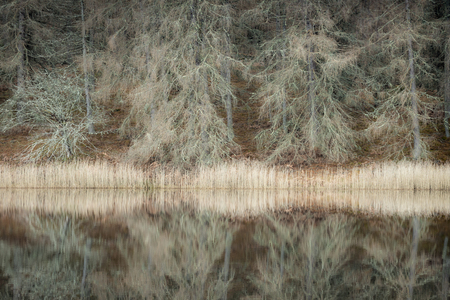 Bare Trees by Loch Pityoulish in the Cairngorms National Park of Scotland. Stock Photo