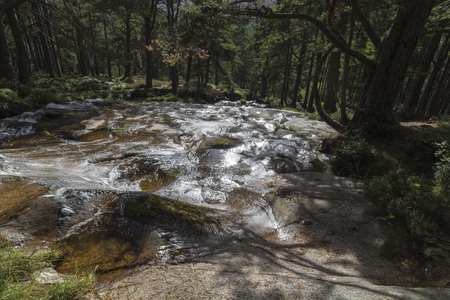 Forest waterfall at Glen Feshie in the Cairngorms National Park.