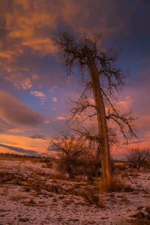 Lone, bare tree against rosy sunset with snow on the ground 版權商用圖片