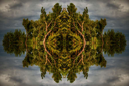 utopia: Eye-shaped Symmetry of trees with hidden images against dramatic sky Stock Photo