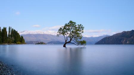 To Drzewo Wanaka