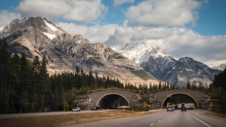 Drive through wildlife overpass in Banff National Park, Canadian Rockies 스톡 콘텐츠
