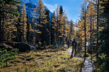 Hiking at Lake OHara in Yoho National Park, Canadian Rockies Stock Photo