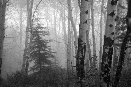 Misty woods near lake Patricia in Jasper National Park, Canadian Rockies Reklamní fotografie