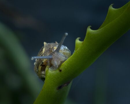 Front view of a snail in shell crawling on plants in the garden