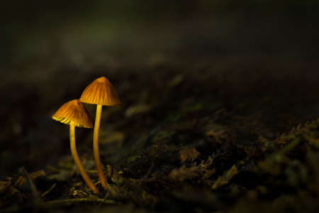 Wild mushrooms in the forest with dreamy blurred green background