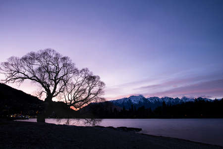 Winter willow on lake Wakatipu at sunrise with the Remarkables in the distance Imagens