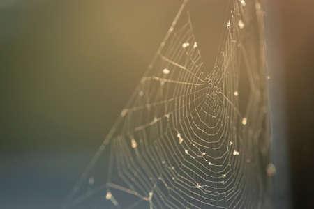 Empty spider webs glittering under the morning sun
