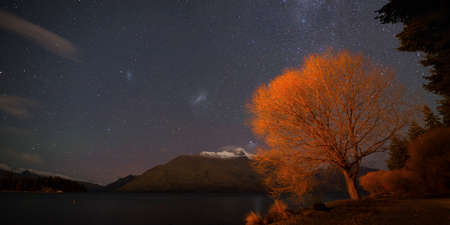 Winter willow on lake Wakatipu under the night sky with Milky Way and Magellanic clouds, Queenstown, New Zealand