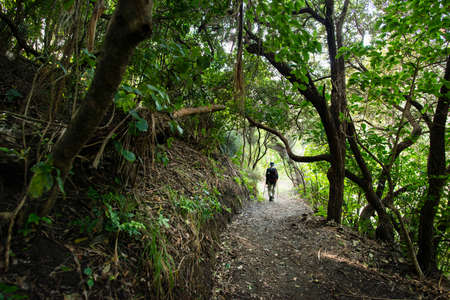 Walking in the forest. Image taken from the track to Anawhata beach, Auckland Imagens