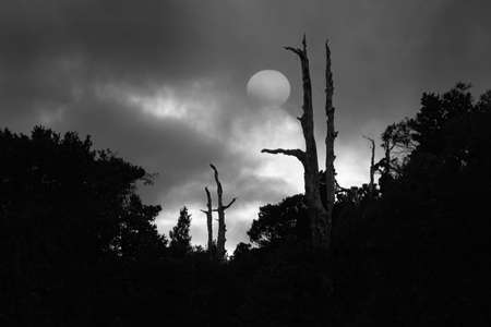 Black and white image of silhouette dead tree trunks with the full moon. Imagens