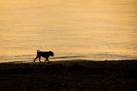 A small dog walking on the beach, back lit by the early morning sun Imagens
