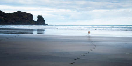 Dog running with paw prints on the black sandy Bethells beach, Waitakere, Auckland