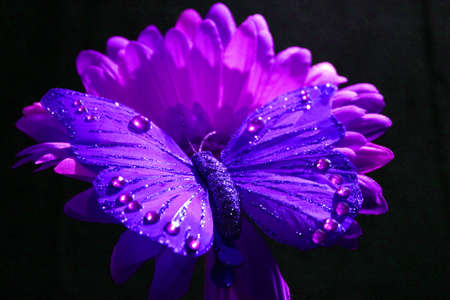 colorful flowers: Purple Butterfly Decoration