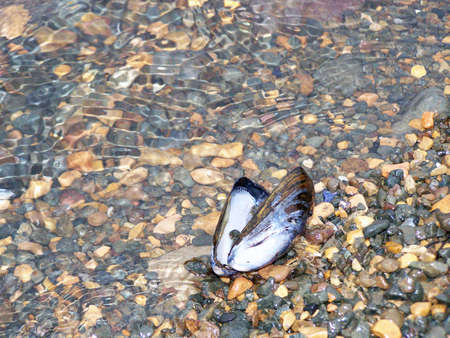 Mussel Shell on the Beach photo