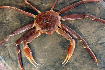 crab pots: Top view of an entire crab before cooking