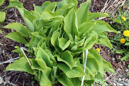 Spring foliage Stock Photo - 13794917
