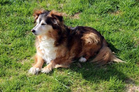Cute Mixed Breed Dog Stock Photo - 13794960
