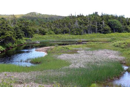 muddy: Muddy and murky swamp