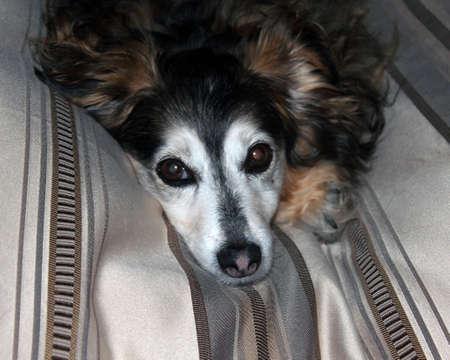 loveable: Small mixed breed dog Stock Photo
