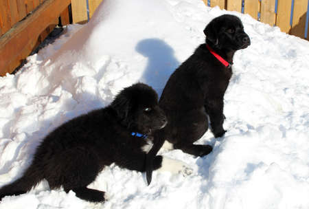 Two puppies outside in the winter snow photo