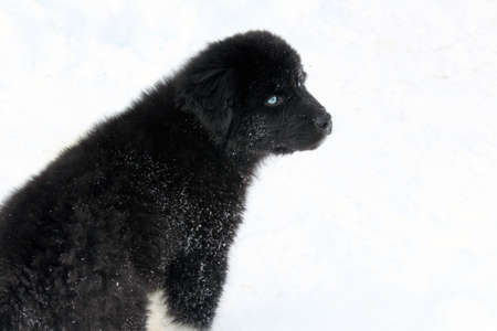 Puppy in the snow Stock Photo - 21160325