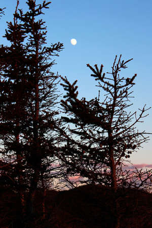 treetops: Treetops and the moon