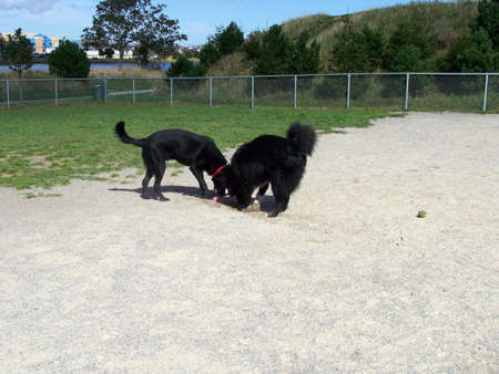 Dogs playing at the park Stock Photo - 24035325