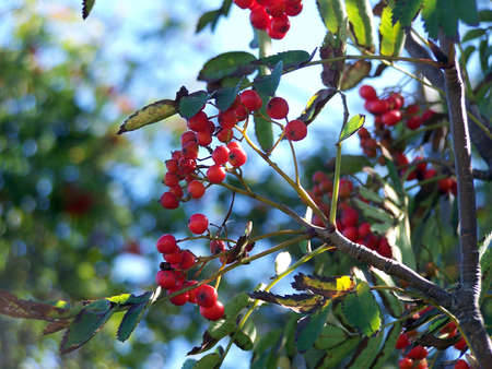 decora: Dogberry Trees