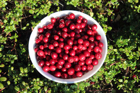 A bowl of lingonberries in the bushes and pic taken from above