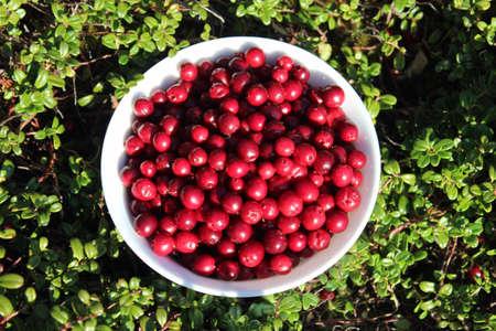 위에서 찍은 숲과 그림에서 lingonberries의 그릇 스톡 콘텐츠 - 24390924