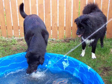 Dogs having summer fun photo