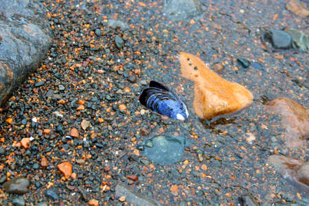 freshwater: Mussel shell on the beach