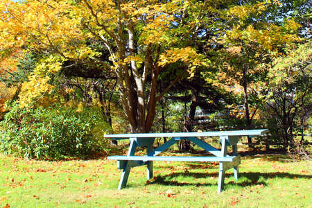 Picnic table under a large tree photo
