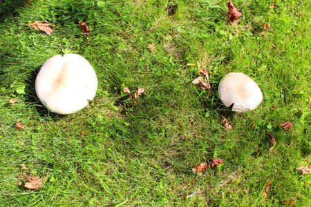 gills: Wild mushrooms Stock Photo
