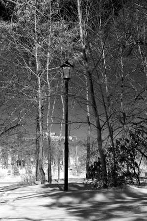 lamp post: Lamp post at the park in winter  black and white