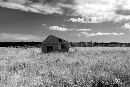 grassy: Old shed in a large grassy field