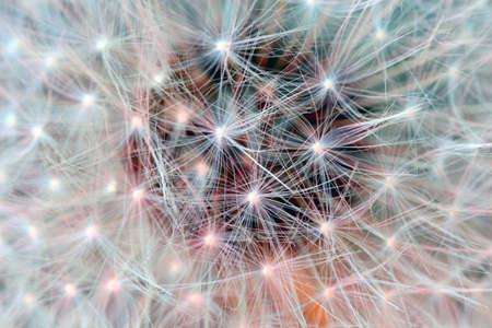 Close up of dandelion seeds Banco de Imagens