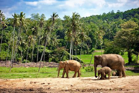 the water hole: elephant family walking towards a water hole Stock Photo