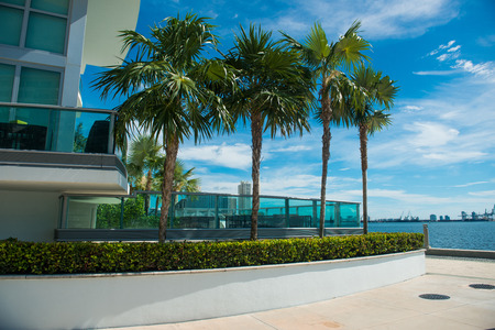 investment real state: Palms near condominium building in Miami Downtown at sunny day
