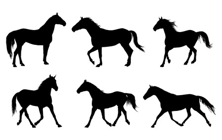 vector set of horse silhouette Illustration