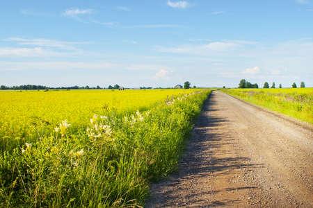 Финляндия: Красивая поле рапса Фото со стока