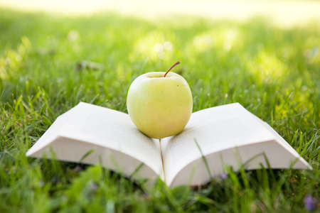 primary education: Open book on the grass