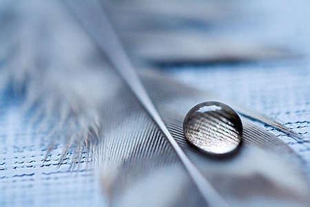 Gota de agua sobre las plumas
