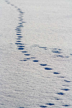Footsteps in snow photo