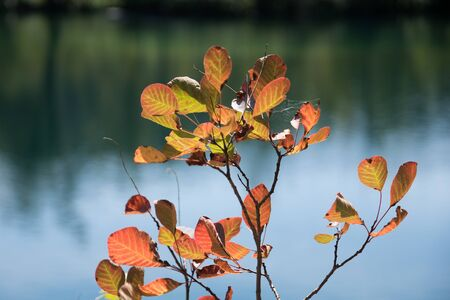 colorful red leaves in front of blurry water surface at plitvive lakes national park croatia
